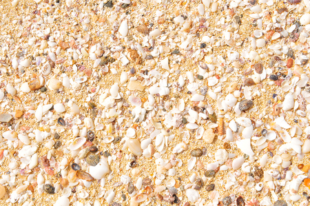 Detail of marine background with sea shells