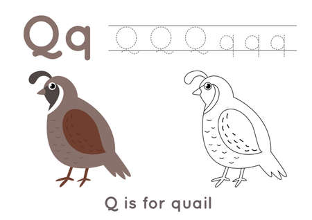 Coloring page with letter Q and cute cartoon quail.