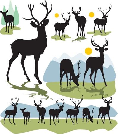 venado: establecer ciervos siluetas Vectores