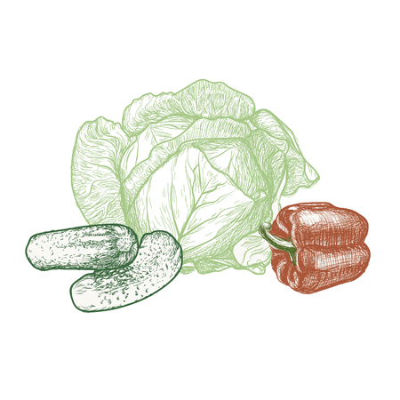 Vegetables vector drawing.