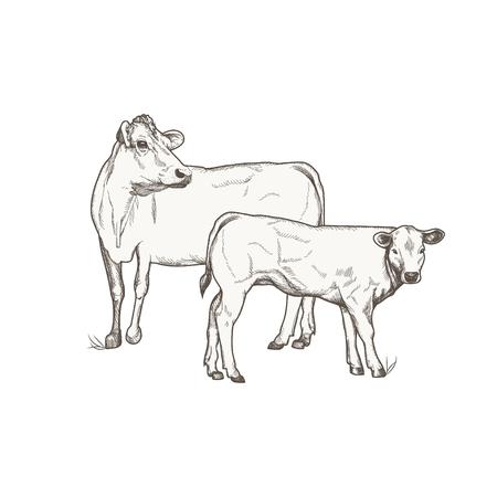 Krowa i cielę wektor rysunek.