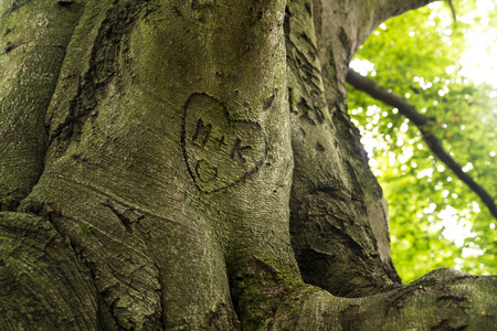 trunk engraved with hearts and initials Stockfoto