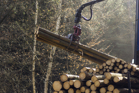 loading harvested timber in the forest