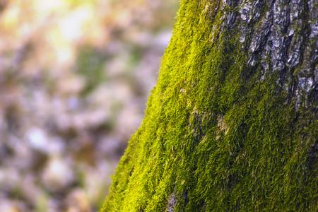 mossy: green mossy tree trunk