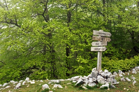 informational: Signpost in the forest