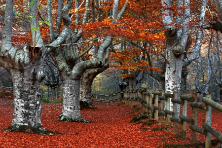 gated: Gated beech forest Stock Photo