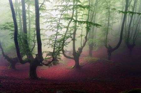 mirk: gloomy forest
