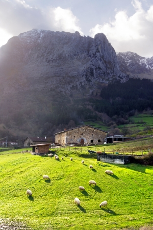 A typical basque country farmhouse with sheep in Atxondo valley photo