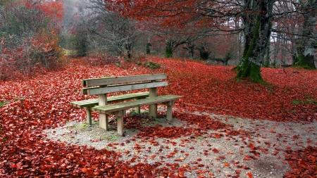 banc de parc: Banc en automne avec les feuilles rouges