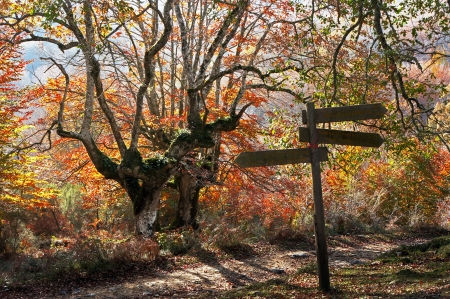 Signpost in autumn forest photo