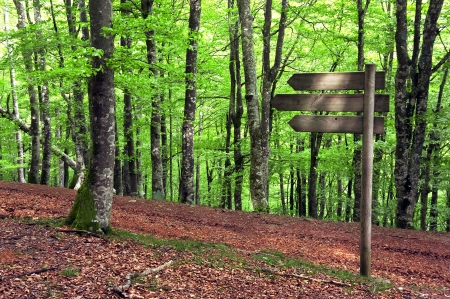 wooden signpost in beech forest photo