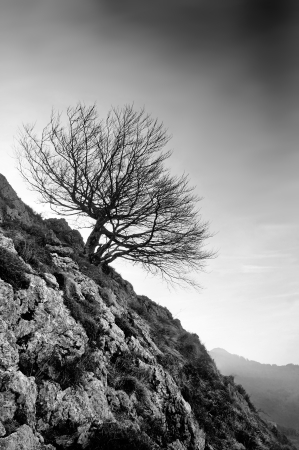 withe: lonely tree in rocky mountain in black and withe Stock Photo