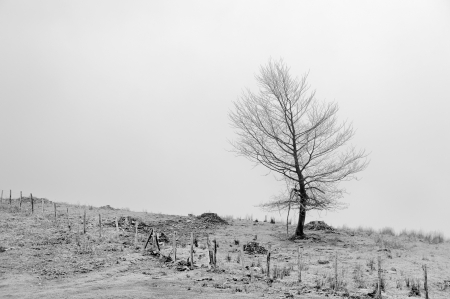 solitary tree with a fence Stock Photo - 21581583
