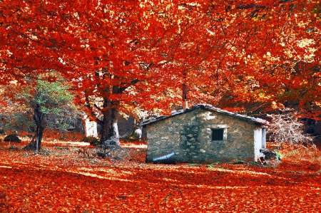 house in autumn forest with vivid red color Stock Photo