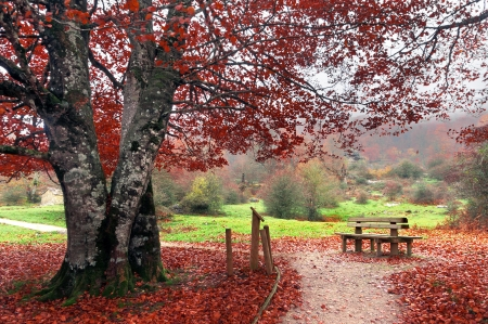 bench in park on autum photo