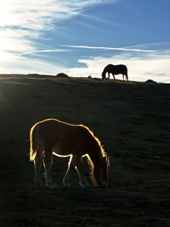 silhouette of horses at sunset with beautiful light photo