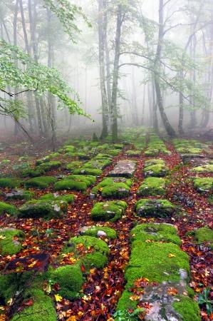 sedimentary rocks in foggy forest Standard-Bild