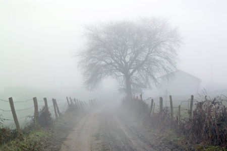 朝の霧と田舎道