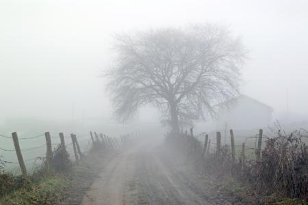 platteland weg met mist in de ochtend
