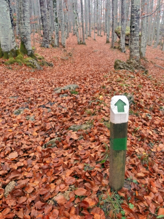 one way direction wooden signpost in autumnal forest photo