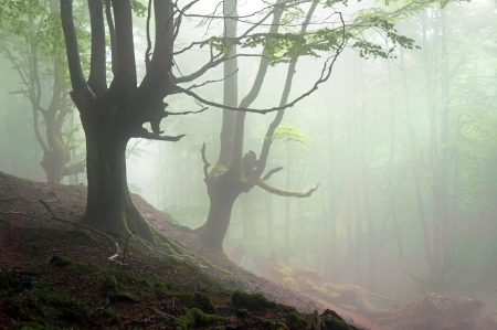 creepy forest with scary trees and fog photo