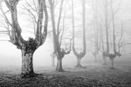 creepy forest with scary trees in black and white photo