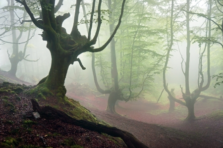 creepy forest with horror trees and fog photo