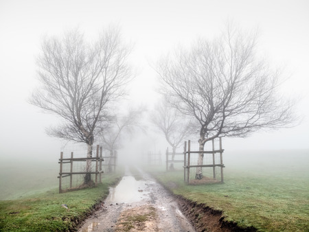 path surrounding by trees in the fog photo