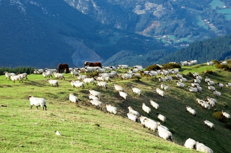 sheep and horses on mountain slope