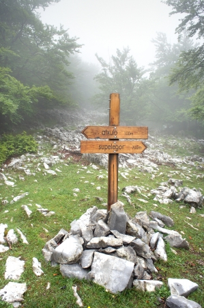 wooden signpost in forest with fog photo