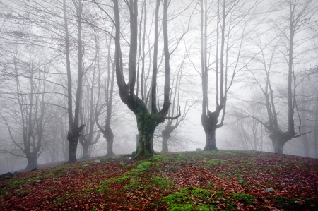 gloomy forest with scary trees