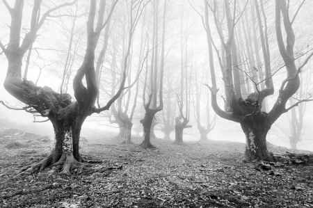 gloomy forest with scary trees in black and white photo