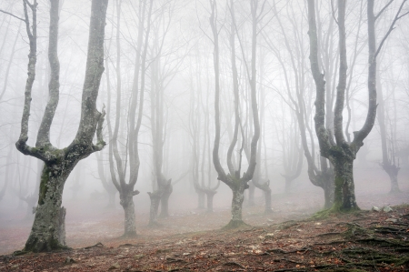 gloomy: gloomy forest with scary trees