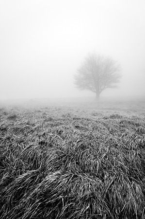 solitary and lonley tree with fog in black and white Standard-Bild