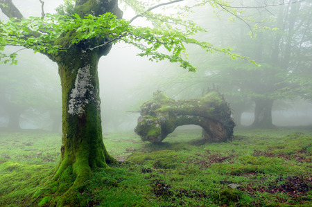 mistery: forest with fog in spring and a dead trunk