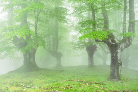 magical forest with fog and beautiful light Stock Photo