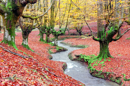 forest in autumn with vivid colors and a stream