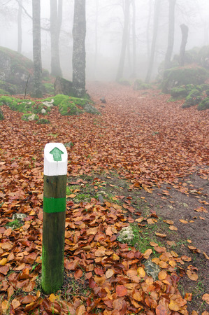 wooden signpost with an arrow in autumnal forest photo