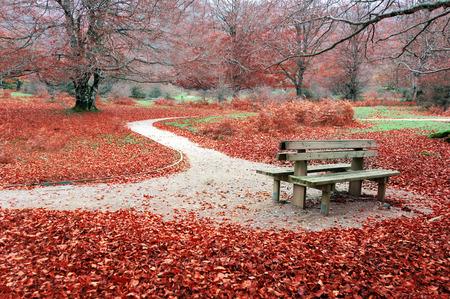 bench in park on autum photo