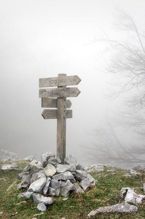 wooden signpost in foggy forest photo