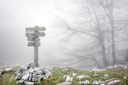 wooden signpost in foggy forest