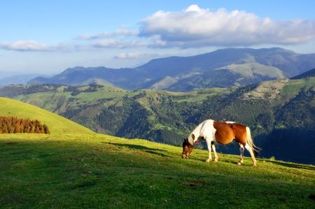 horse on mountains at sunset Standard-Bild