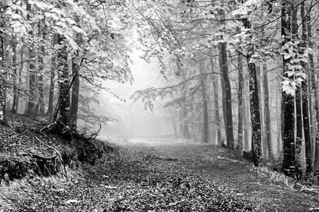 path in foggy forest on black and white Stok Fotoğraf