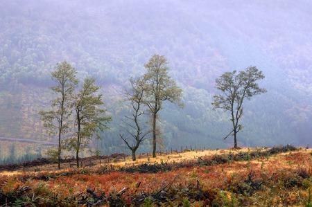 deforestacion: �rboles solitarios debido a la deforestaci�n Foto de archivo