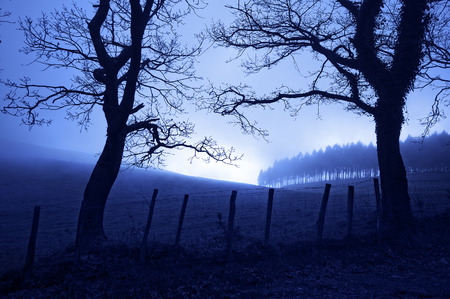 horror landscape at night with creepy trees and fog