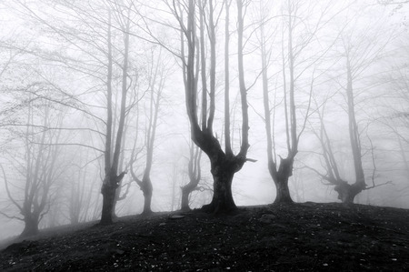 spooky forest with scary trees in black and white