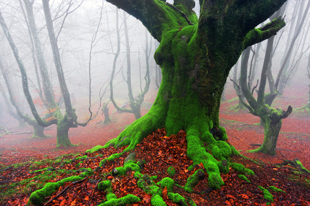 the deep of the forest Standard-Bild