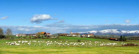 Panorama of sheep near Unza with snowy mountains Standard-Bild