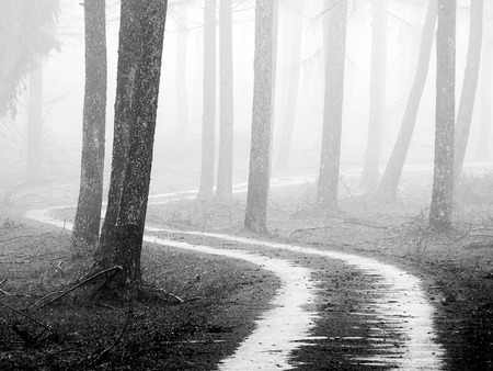 path in the foggy forest. Black and white