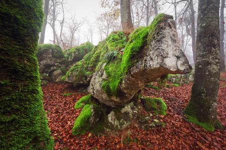 sedimentary: sedimentary rock with capricious in Urbasa. Navarre
